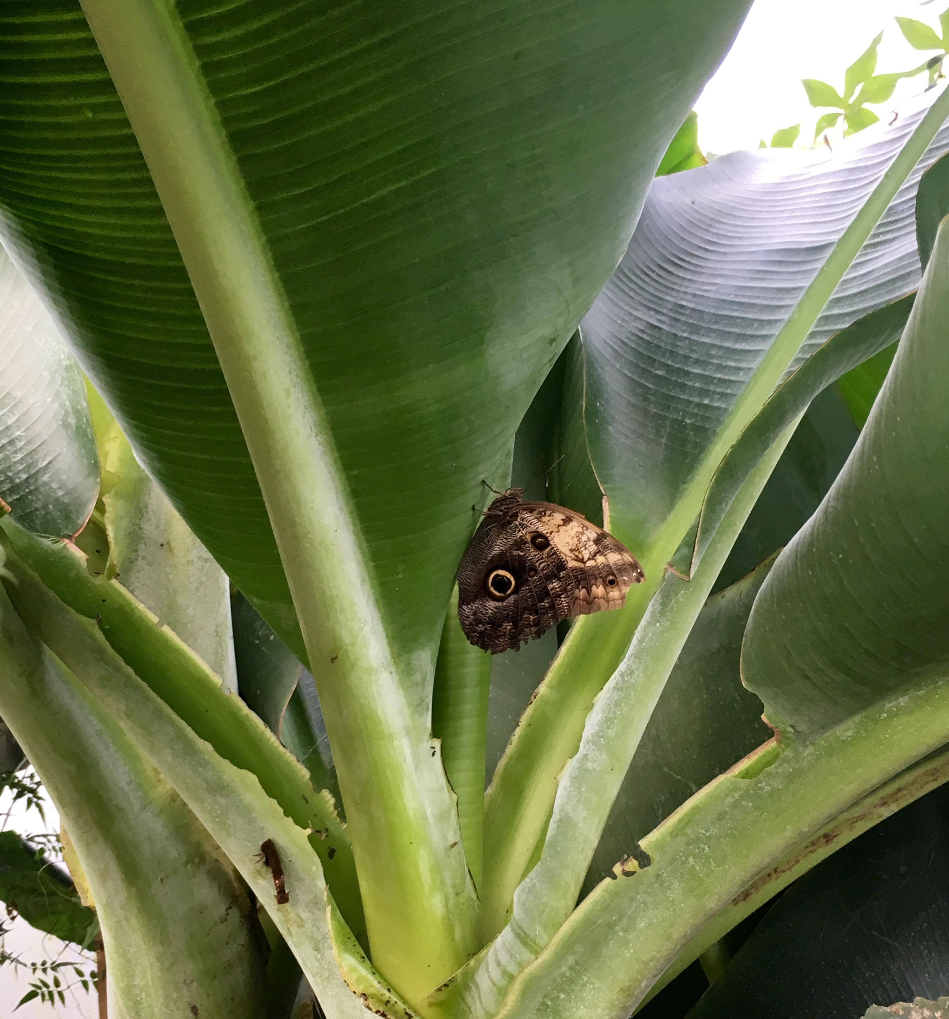longleat-butterfly