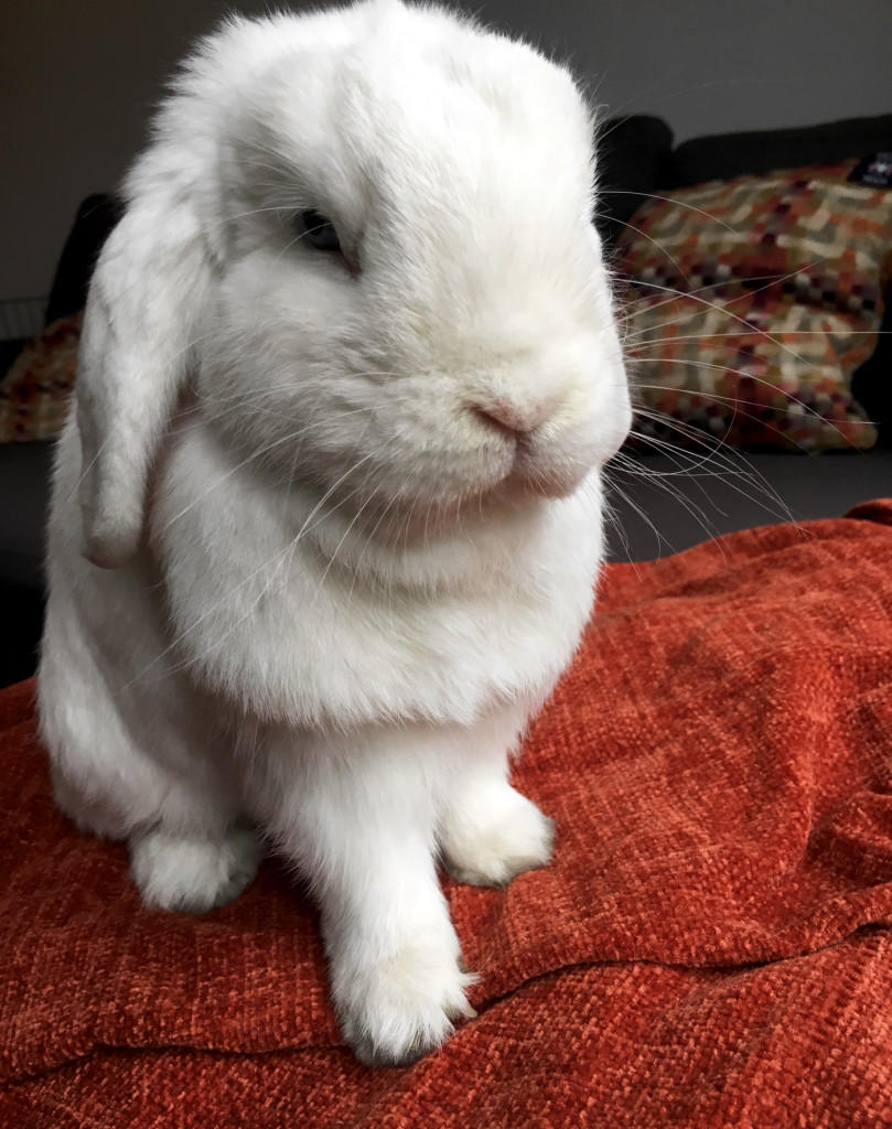 10 Reasons Pet Bunnies Are Everything