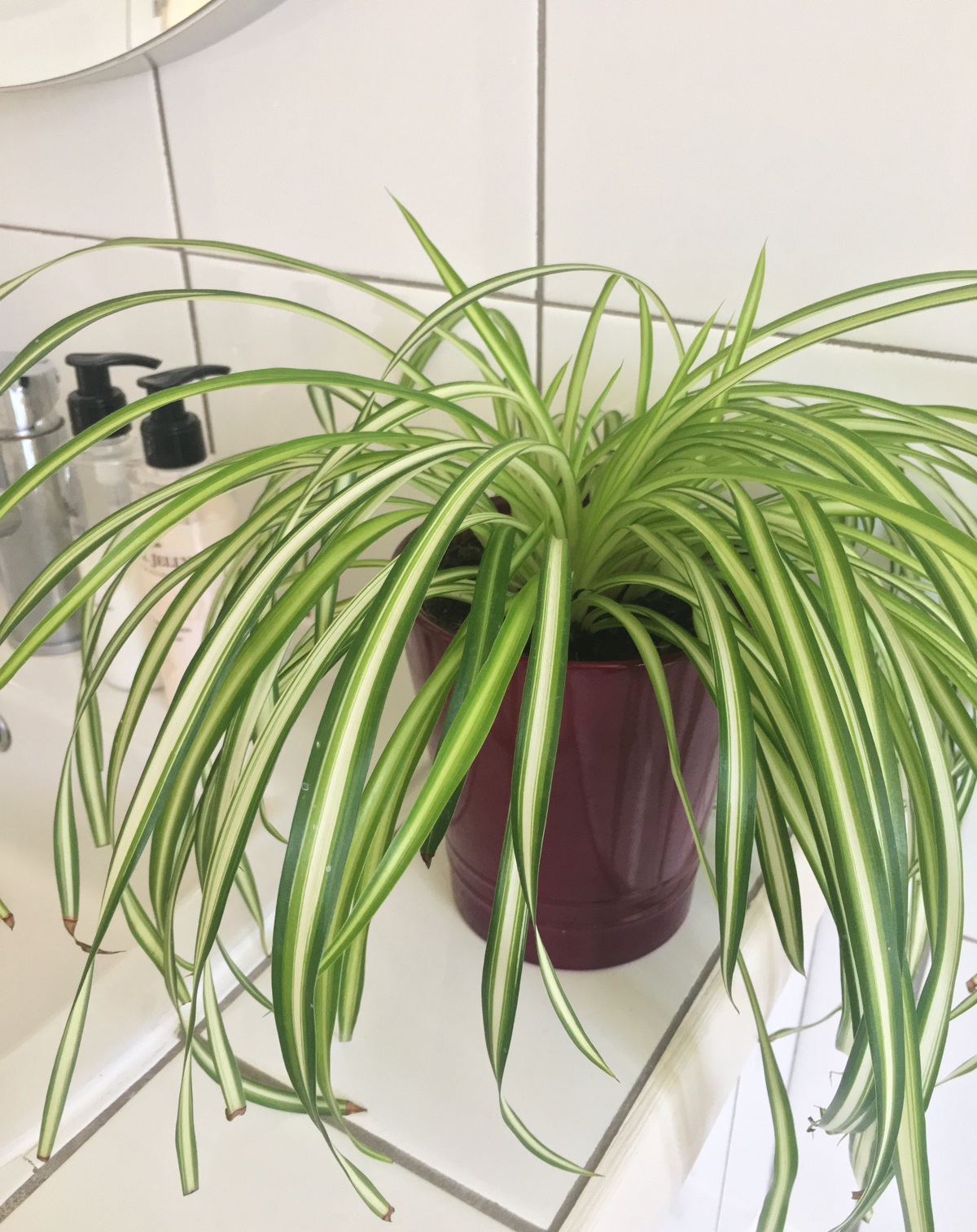 house-plant-2