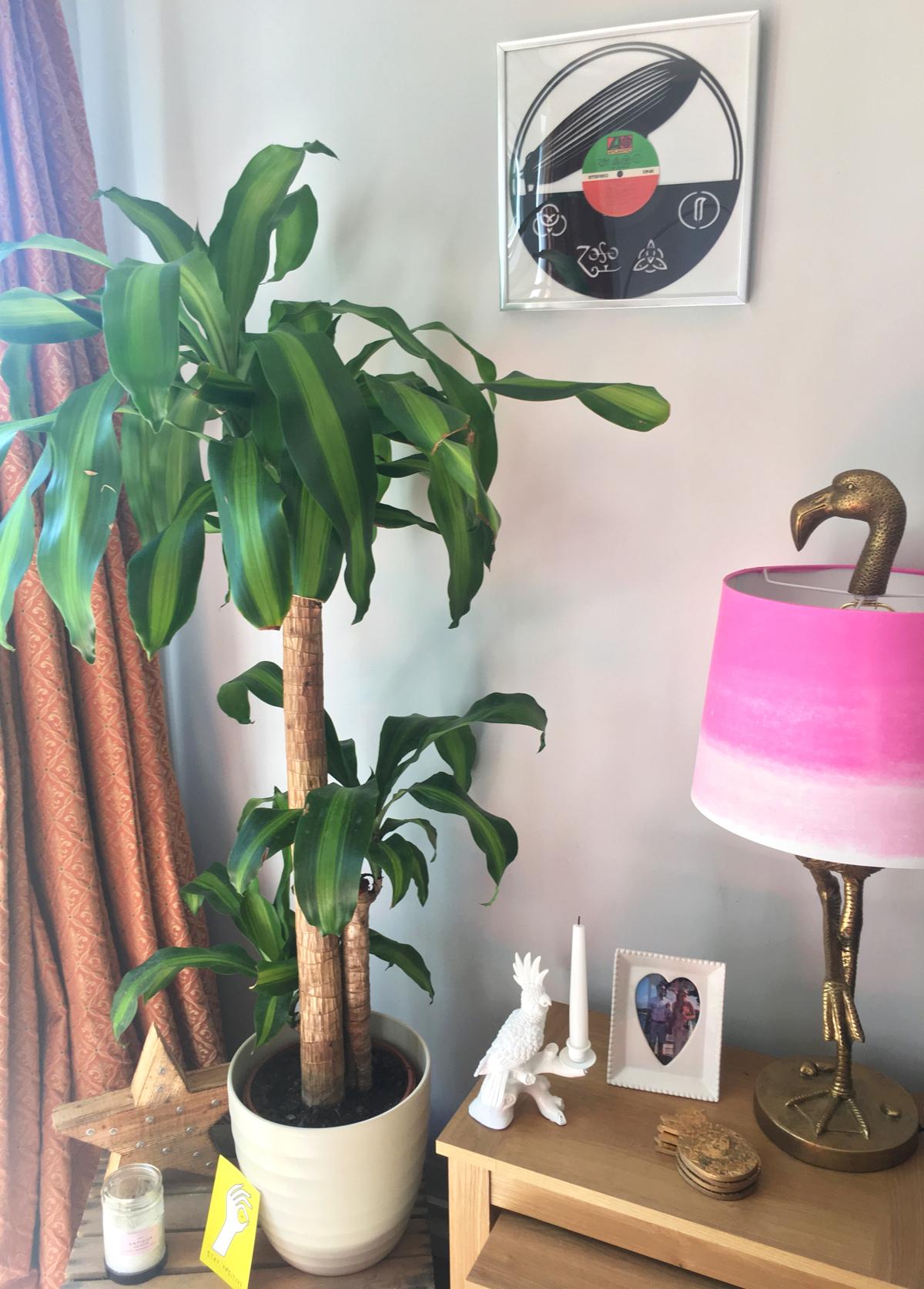 house-plant-5