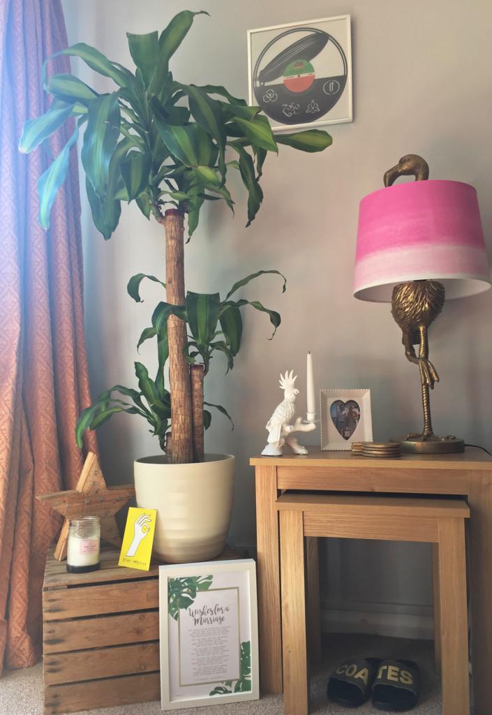 My Love Affair with House Plants