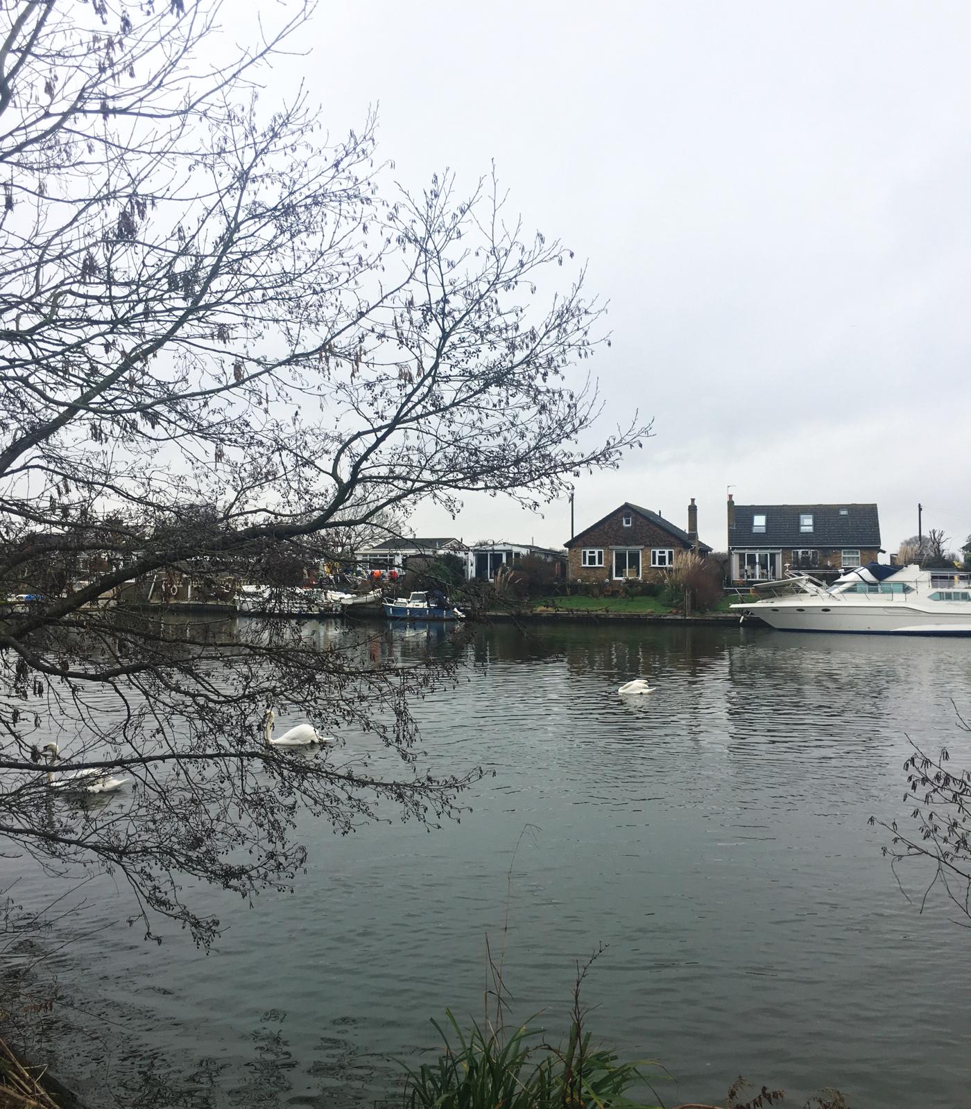 River Thames in Walton